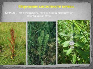 Опреление кислотности почвы. Кислые — конский щавель, полевой хвощ, трехцветн