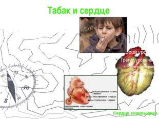 Табак и сердце Сердечно – сосудистые болезни играют ведущую роль в заболеваем