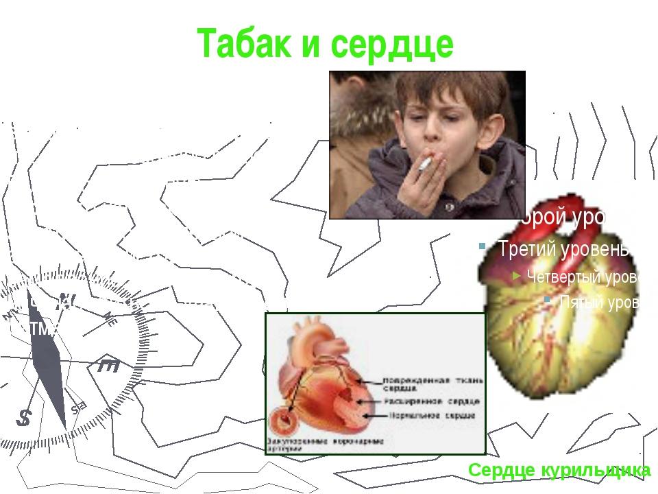 Табак и сердце Сердечно – сосудистые болезни играют ведущую роль в заболеваем...