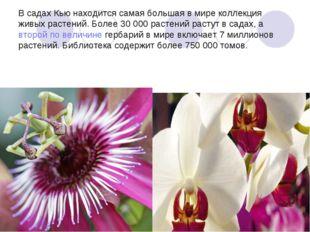 В садах Кью находится самая большая в мире коллекция живых растений. Более 30