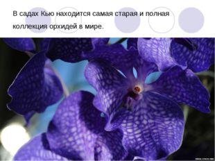 В садах Кью находится самая старая и полная коллекция орхидей в мире.