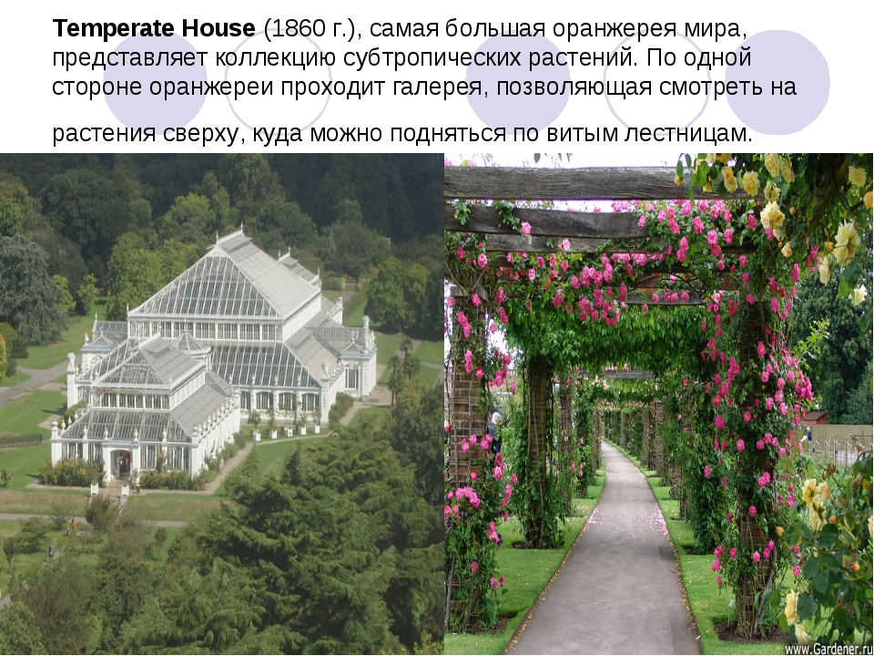 Temperate House(1860 г.), самая большая оранжерея мира, представляет коллекц...