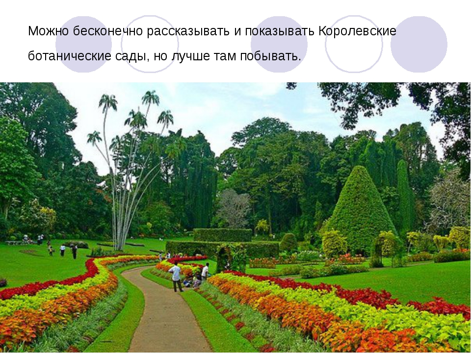 Можно бесконечно рассказывать и показывать Королевские ботанические сады, но...
