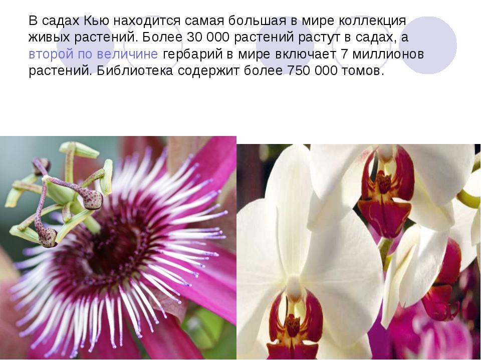 В садах Кью находится самая большая в мире коллекция живых растений. Более 30...