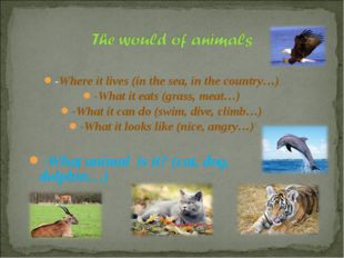 -Where it lives (in the sea, in the country…) -What it eats (grass, meat…) -W