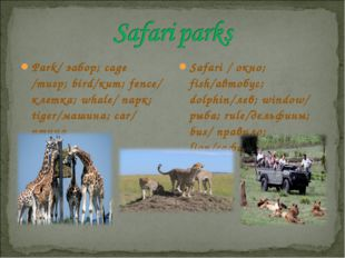Park/ забор; cage /тигр; bird/кит; fence/ клетка; whale/ парк; tiger/машина;