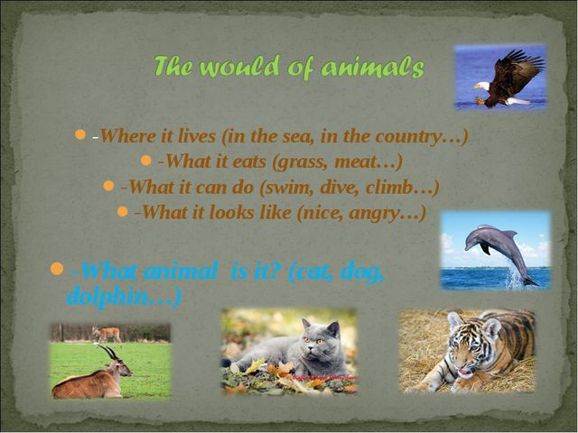 -Where it lives (in the sea, in the country…) -What it eats (grass, meat…) -W...