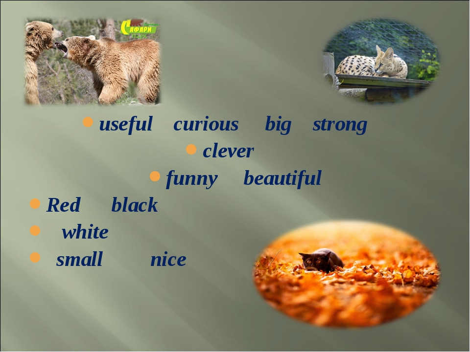 useful curious big strong clever funny beautiful Red black white small nice