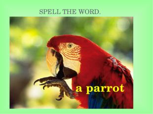 SPELL THE WORD. a fox a pig a cock a lion a monkey a parrot
