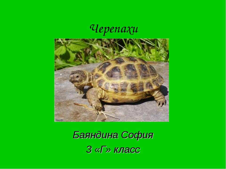 Черепахи Баяндина София 3 «Г» класс