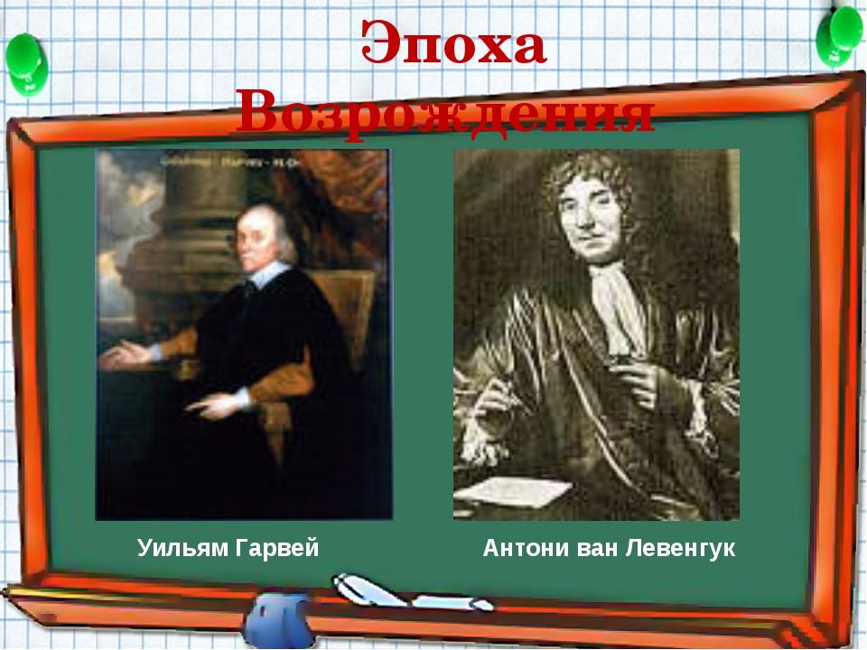 Эпоха Возрождения Антони ван Левенгук Уильям Гарвей