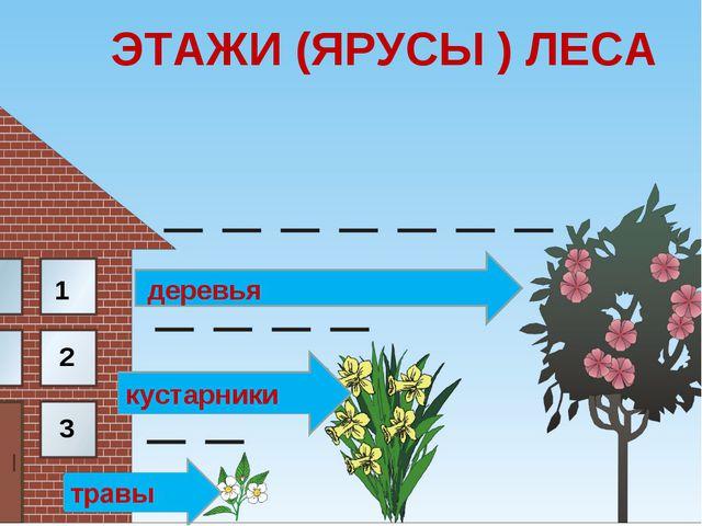 ЭТАЖИ (ЯРУСЫ ) ЛЕСА 1 2 3