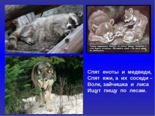 Спят еноты и медведи, Спят ежи, а их соседи – Волк, зайчишка и лиса Ищут пищу
