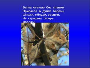 Белка осенью без спешки Припасла в дупле берёзы Шишки, жёлуди, орешки. Не стр