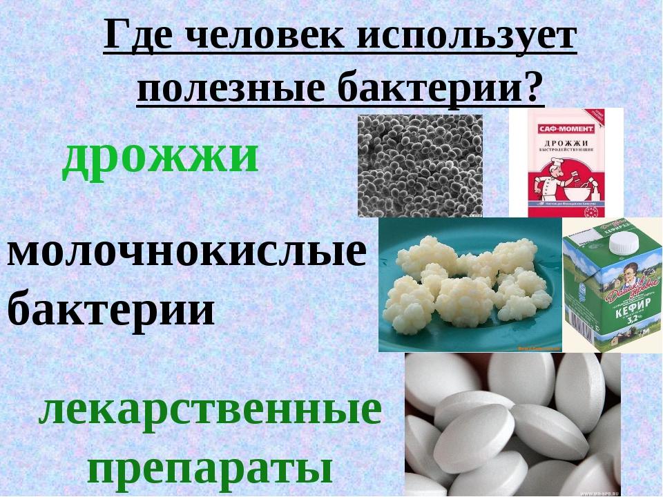 Где человек использует полезные бактерии? дрожжи молочнокислые бактерии лекар...