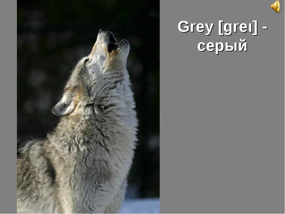 Grey [greι] - серый