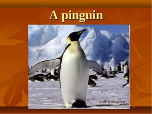 A pinguin
