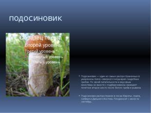подосиновик Подосиновик — один из самых распространенных в умеренном поясе се
