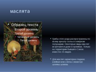 маслята Грибы этого рода распространены по всему ареалу сосны в северном по