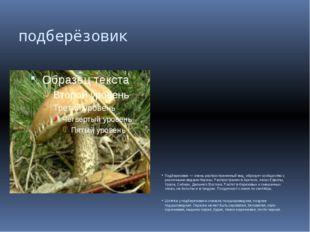 подберёзовик Подберезовик — очень распространенный вид, образует сообщество с