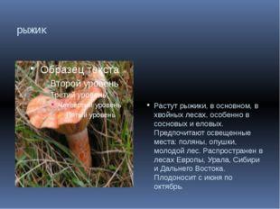 рыжик Растут рыжики, в основном, в хвойных лесах, особенно в сосновых и еловы