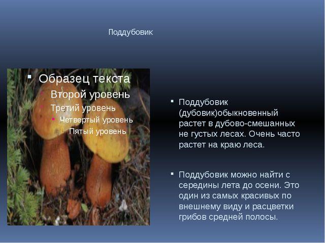 Поддубовик Поддубовик (дубовик)обыкновенный растет в дубово-смешанных не гус...