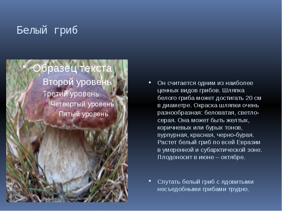 Белый гриб Он считается одним из наиболее ценных видов грибов. Шляпка белого...