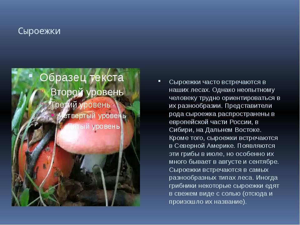 Сыроежки Сыроежки часто встречаются в наших лесах. Однако неопытному человеку...