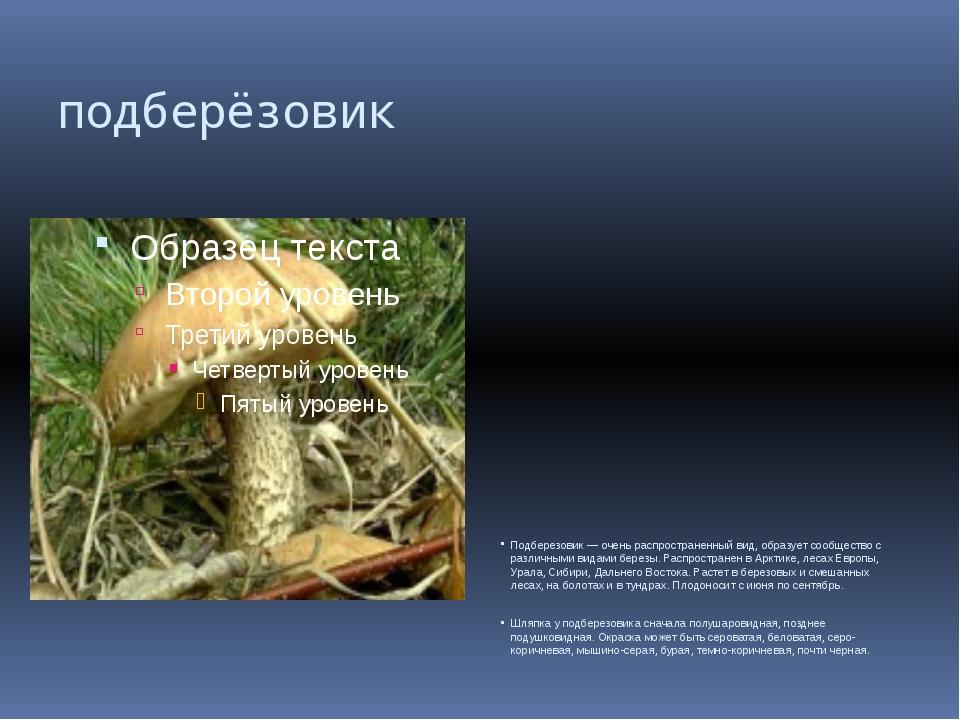 подберёзовик Подберезовик — очень распространенный вид, образует сообщество с...