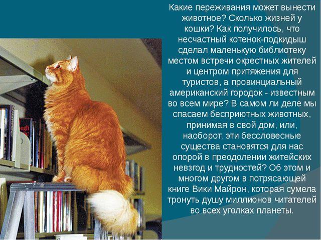 Какие переживания может вынести животное? Сколько жизней у кошки? Как получи...