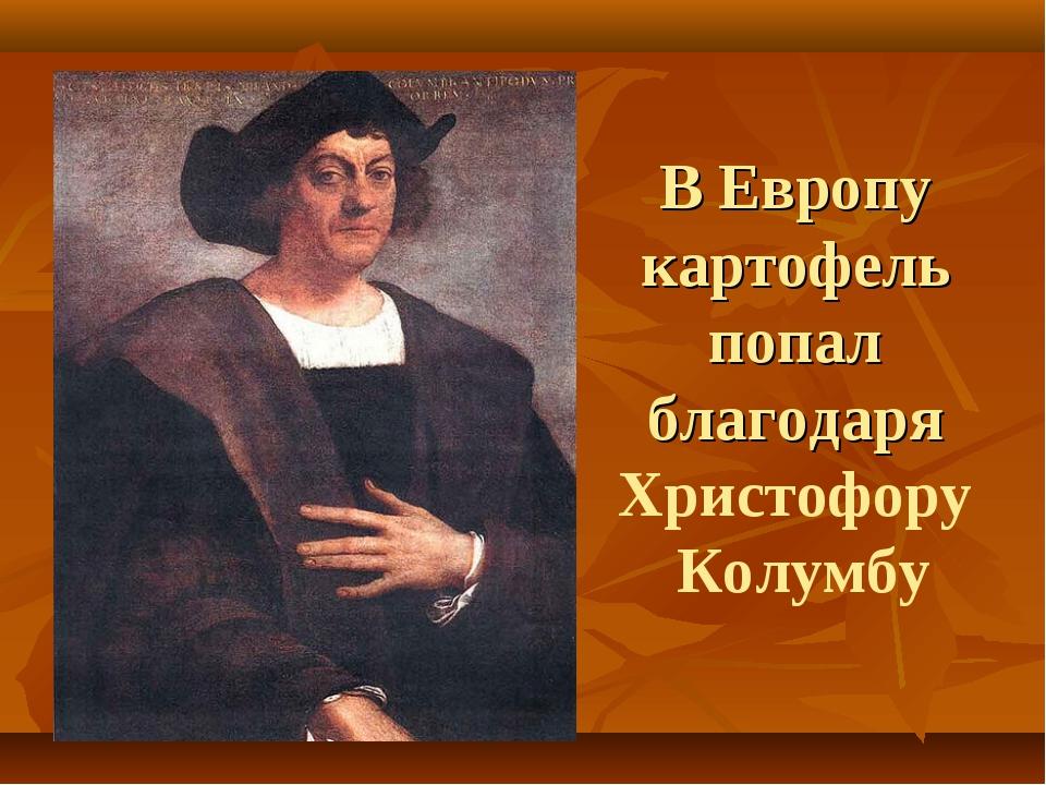 В Европу картофель попал благодаря Христофору Колумбу