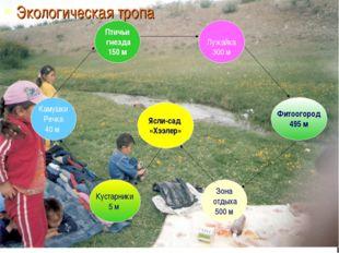 Экологическая тропа Ясли-сад «Хээлер» Камушки Речка 40 м Кустарники 5 м Зона