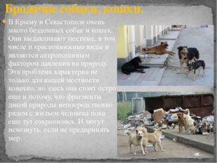 В Крыму и Севастополе очень много бездомных собак и кошек. Они выдавливают ме
