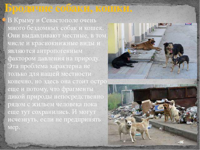 В Крыму и Севастополе очень много бездомных собак и кошек. Они выдавливают ме...