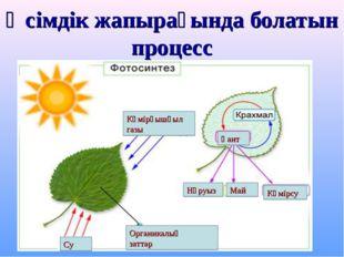 Өсімдік жапырағында болатын процесс Көмірқышқыл газы Органикалық заттар Қант