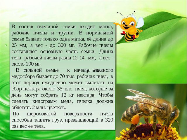 В состав пчелиной семьи входит матка, рабочие пчелы и трутни. В нормальной се...