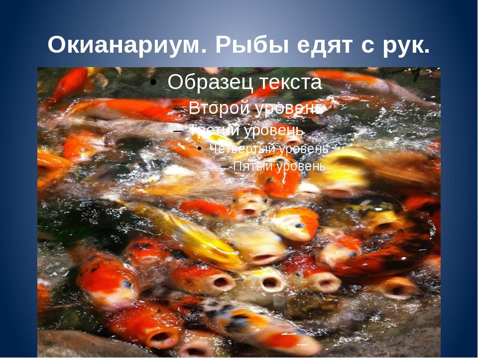 Окианариум. Рыбы едят с рук.