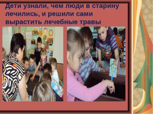 Дети узнали, чем люди в старину лечились, и решили сами вырастить лечебные тр