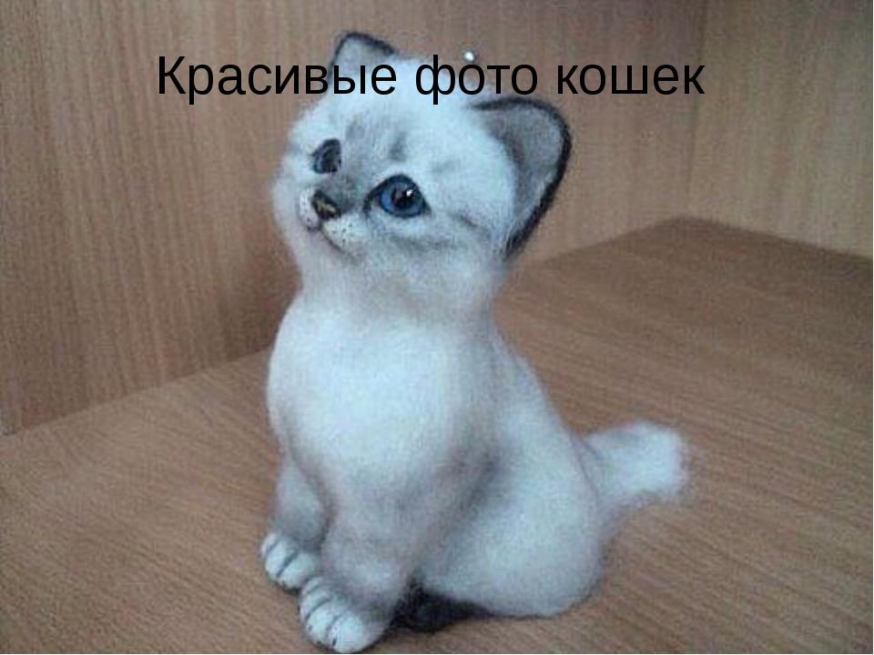 Красивые фото кошек