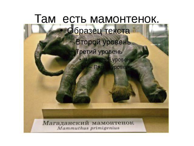 Там есть мамонтенок. Среди интересных экспонатов можно назвать: чучело гигант...