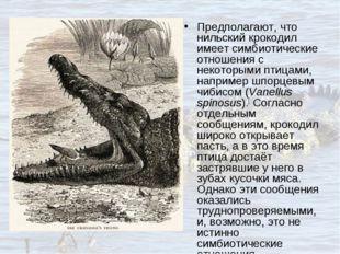 Предполагают, что нильский крокодил имеет симбиотические отношения с некоторы