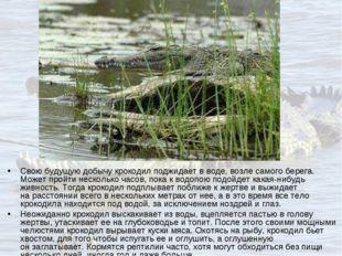 Свою будущую добычу крокодил поджидает вводе, возле самого берега. Может про