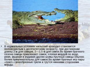 В нормальных условиях нильский крокодил становится половозрелым к десятилетне