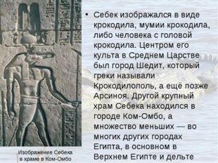 Себек изображался в виде крокодила, мумии крокодила, либо человека с головой