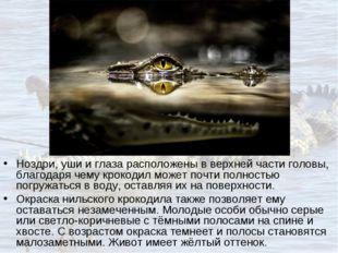 Ноздри, уши и глаза расположены в верхней части головы, благодаря чему крокод