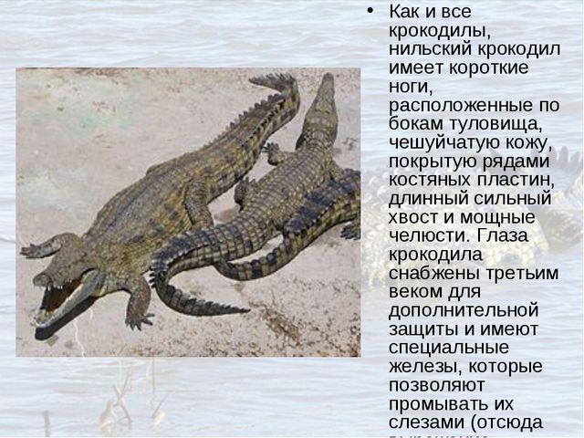 Как и все крокодилы, нильский крокодил имеет короткие ноги, расположенные по...