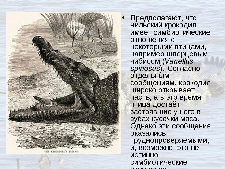 Предполагают, что нильский крокодил имеет симбиотические отношения с некоторы...