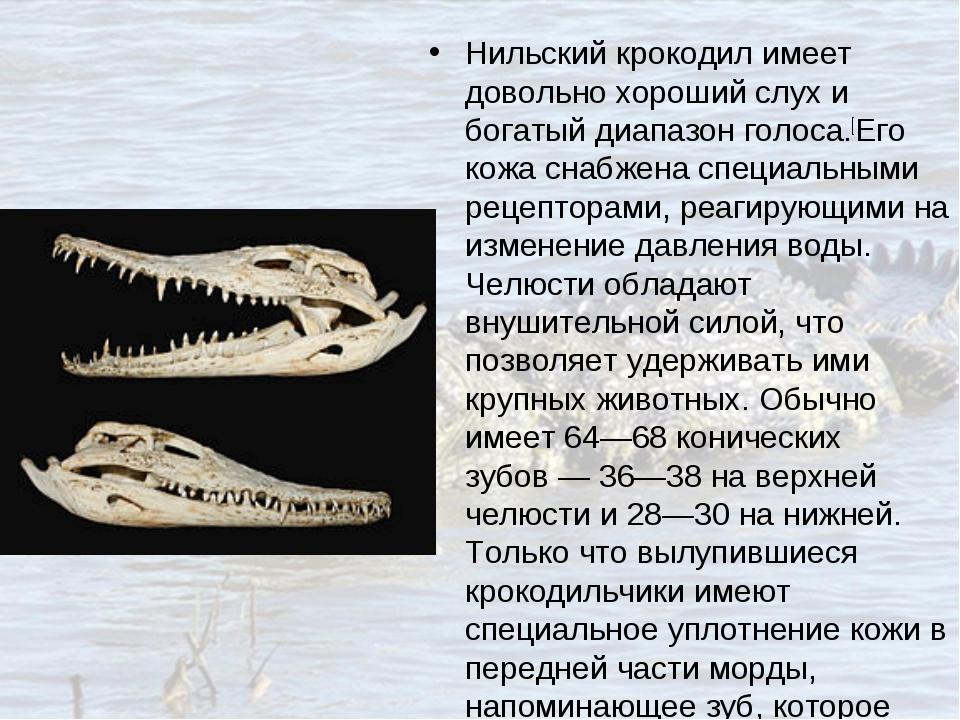Нильский крокодил имеет довольно хороший слух и богатый диапазон голоса.[Его...