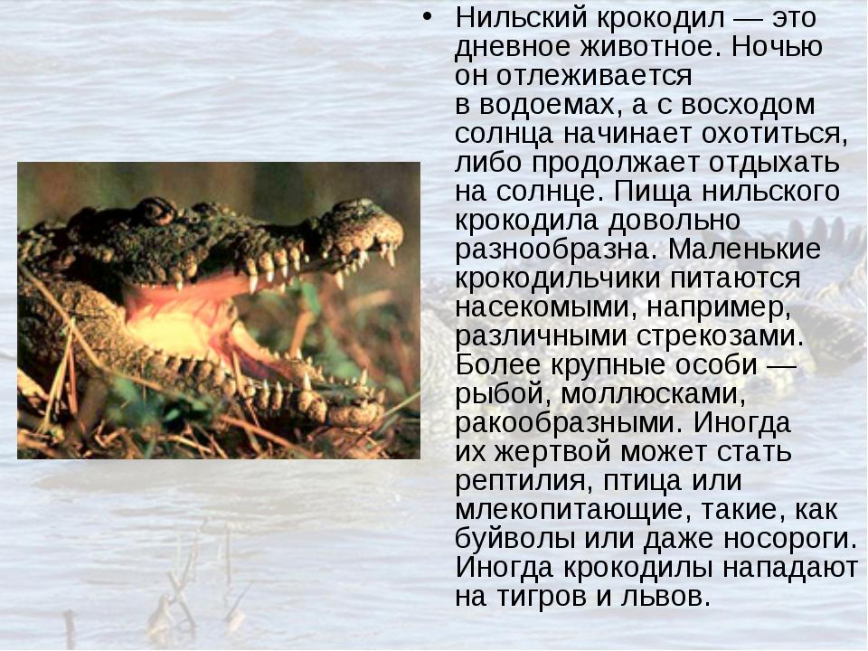 Нильский крокодил— это дневное животное. Ночью онотлеживается вводоемах, а...