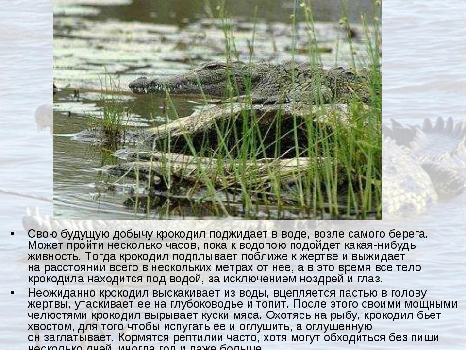 Свою будущую добычу крокодил поджидает вводе, возле самого берега. Может про...